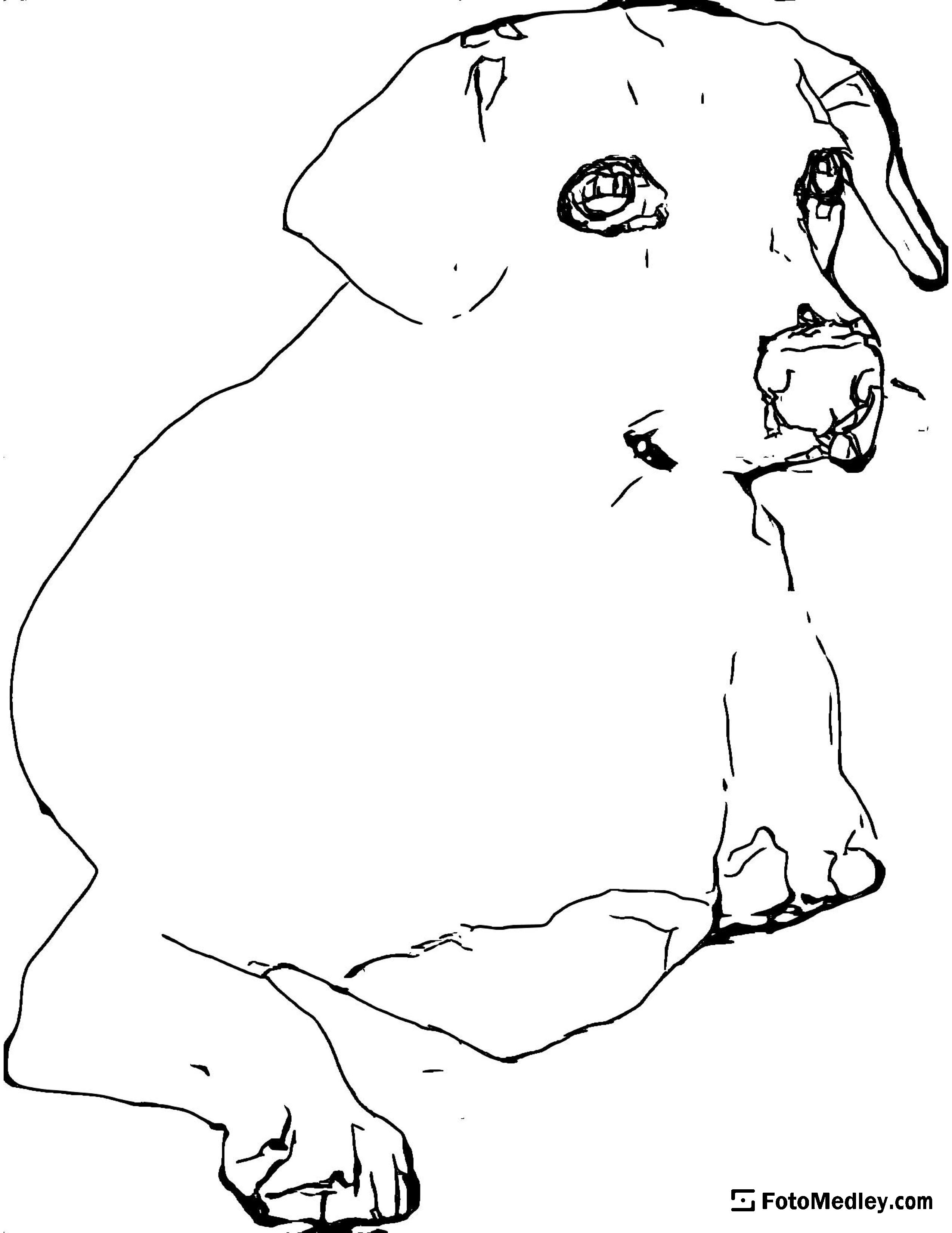 A coloring page of a a small dog relaxing.
