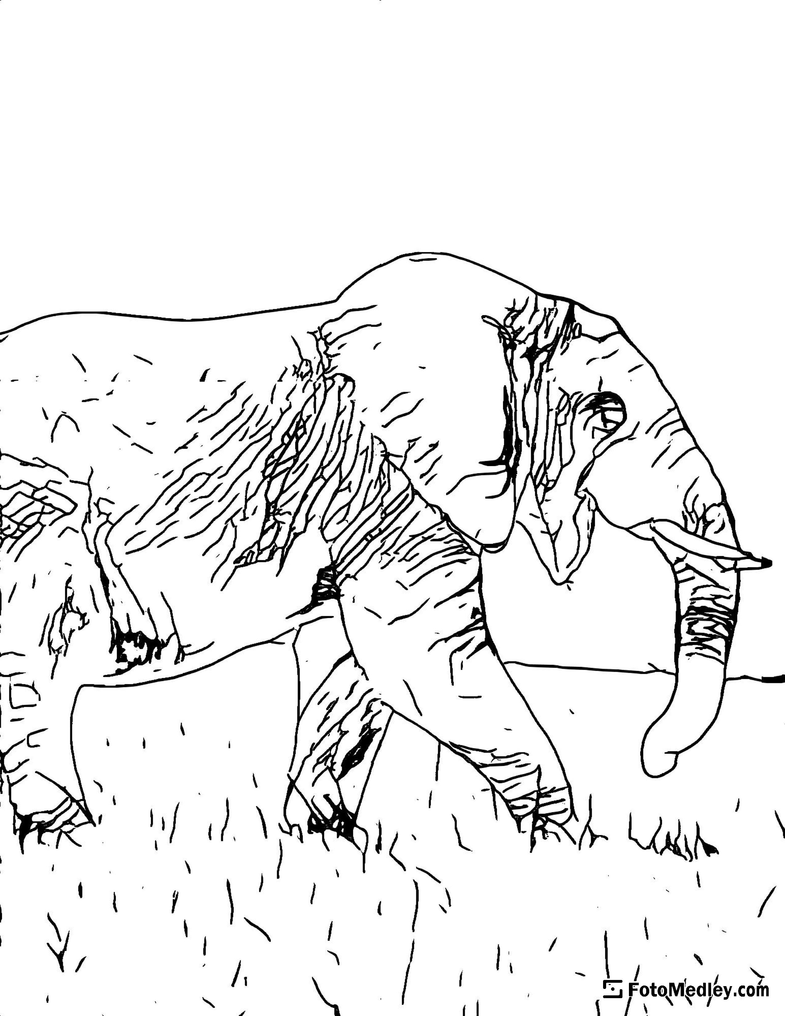 A coloring page of a of an elephant walking through the savanna.