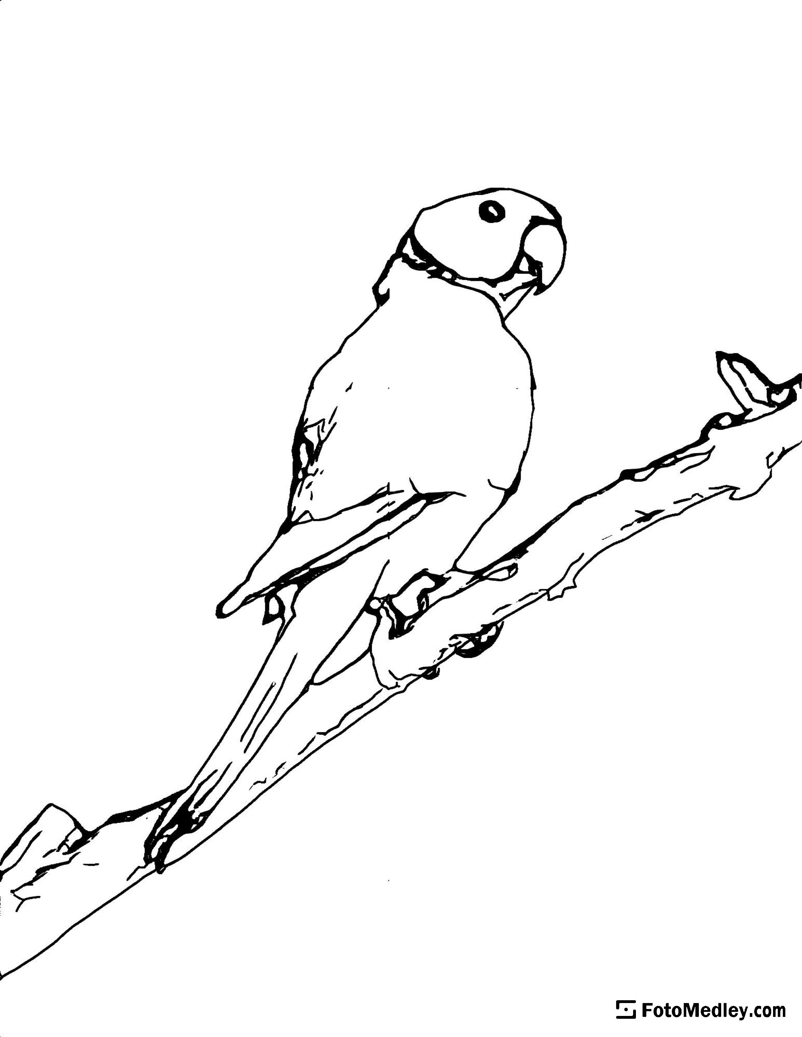 A coloring page of a a parrot standing on a branch.