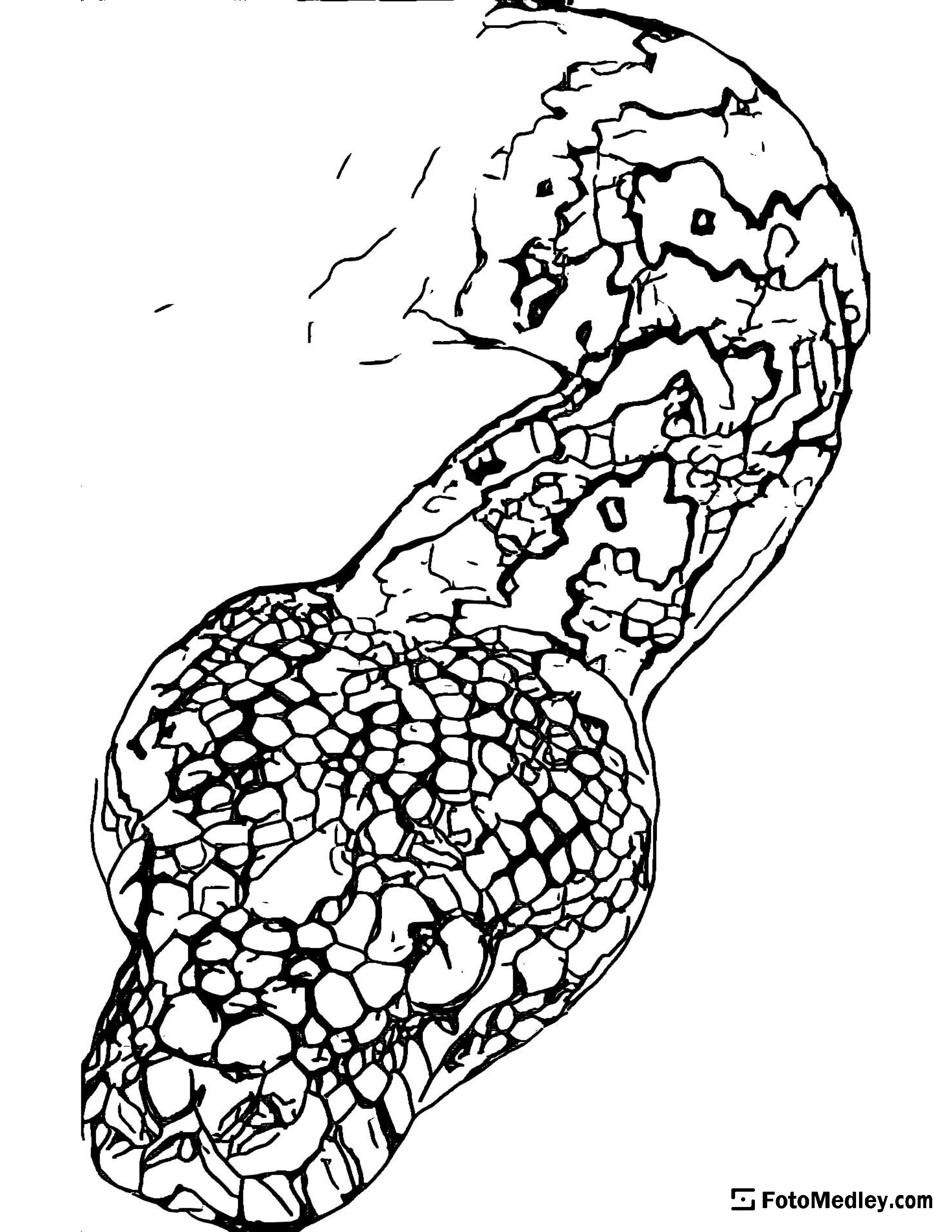Free snake coloring sheet