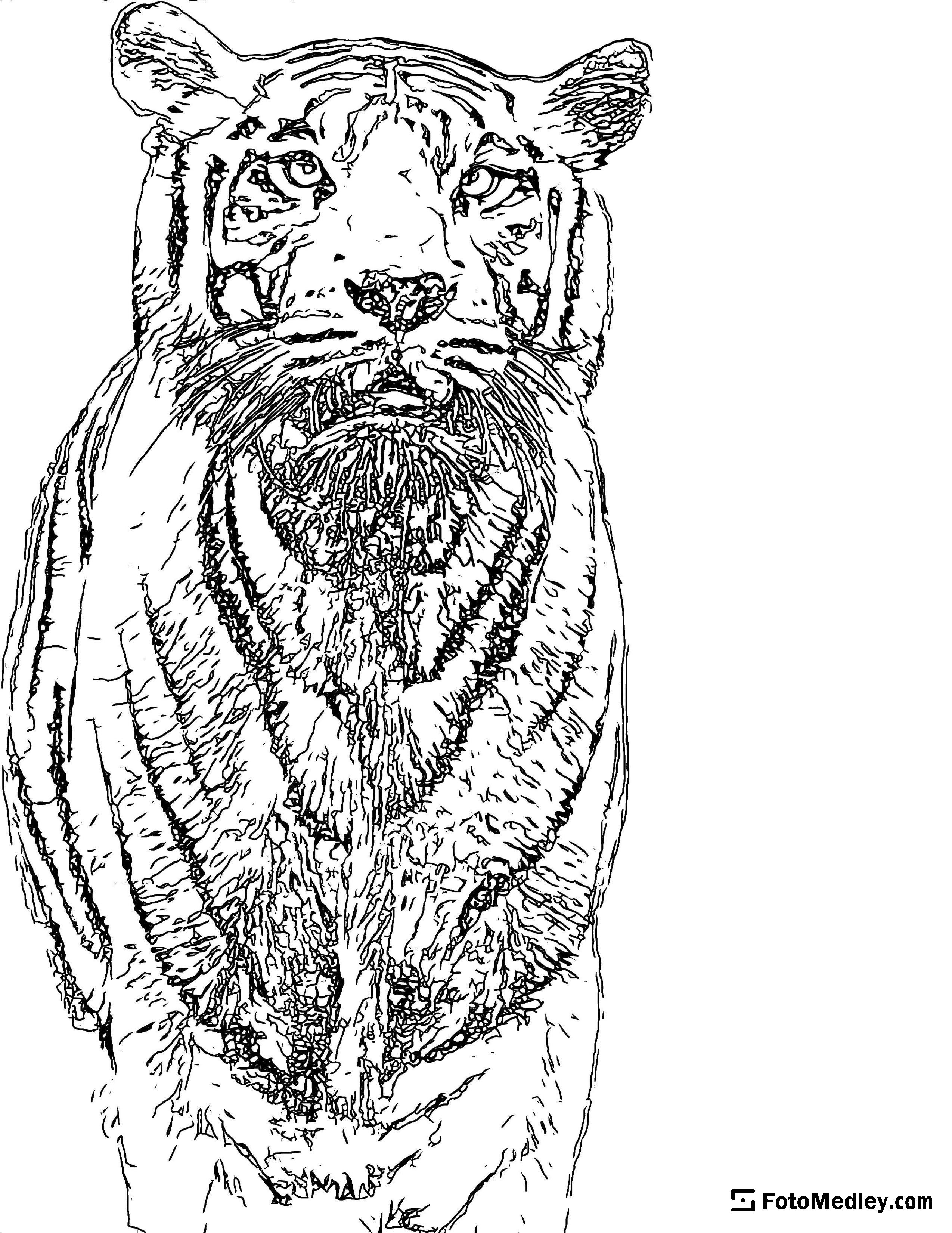 """A coloring page of a beautiful tiger. This was generated with the """"texture"""" image processing option turned on."""